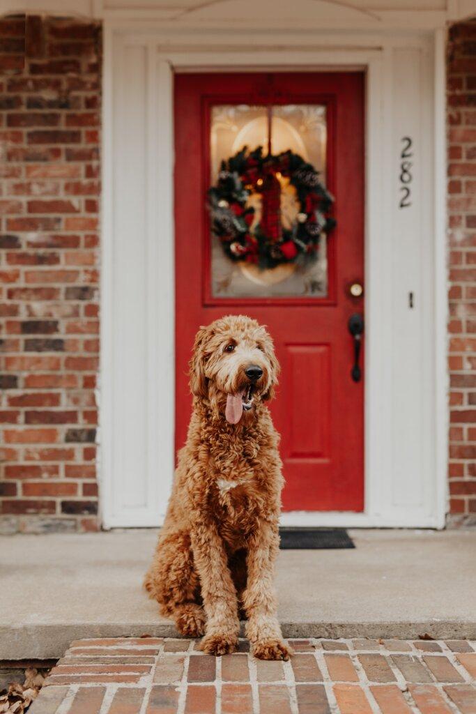 Dog in front of door with Christmas wreath