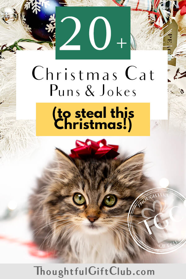 20+ Christmas Cat Puns for the Purr-fect Instagram Captions