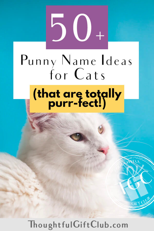 50+ Punny Cat Name Ideas That Are Simply Ameowzing