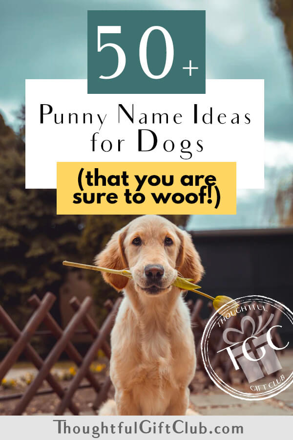 50+ Dog Pun Names That We're Sure You'll Woof